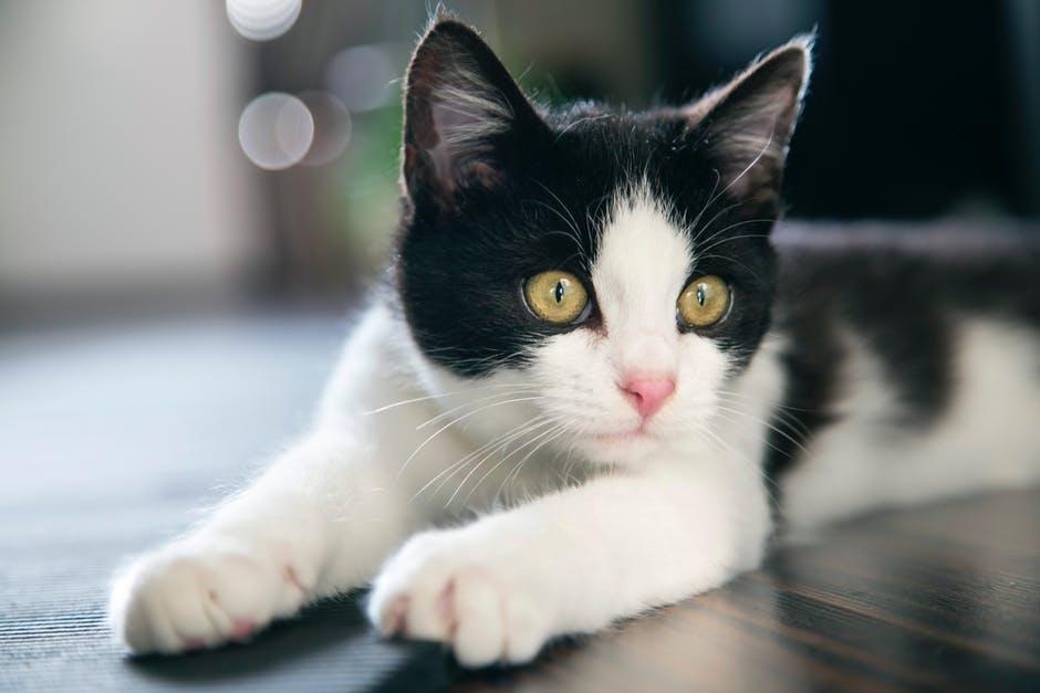 manfaat memeluk kucing