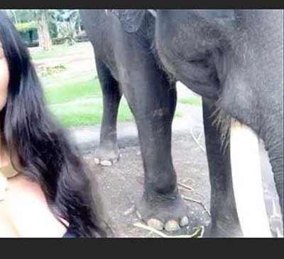 kim-kardashian-bersama-gajah