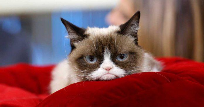grumpy-cat-patung