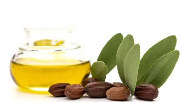 minyak-jojob-amanfaat