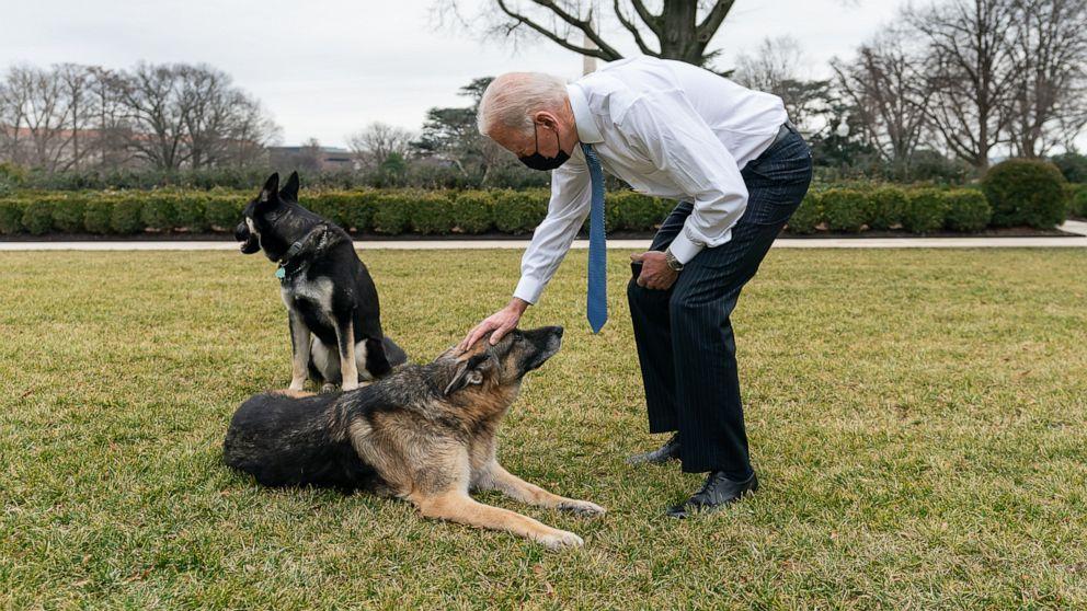 anjing joe biden major dan champ